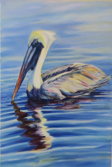 blue water pelican